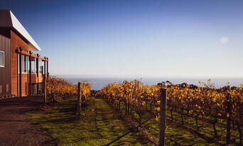 Mornington and Bellarine Peninsula's Food and Wine Tour including Winery Lunch Thumbnail 3