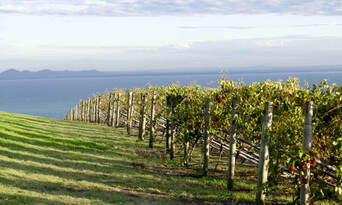 Mornington and Bellarine Peninsula's Sightseeing Tour including Sailing Cruise and Lunch Thumbnail 3