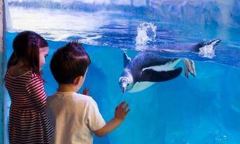 SEA LIFE Sydney Aquarium Admission Thumbnail 2