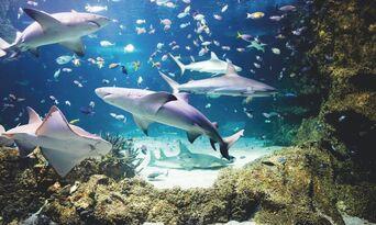 SEA LIFE Sydney Aquarium Admission Thumbnail 3