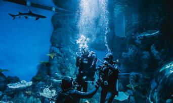 Dive with the Sharks at Cairns Aquarium Thumbnail 1