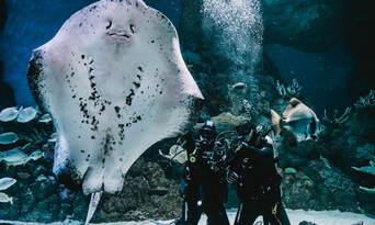 Dive with the Sharks at Cairns Aquarium Thumbnail 2
