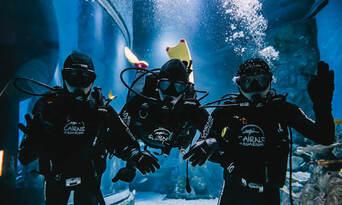 Dive with the Sharks at Cairns Aquarium Thumbnail 3