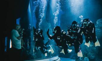 Dive with the Sharks at Cairns Aquarium Thumbnail 4