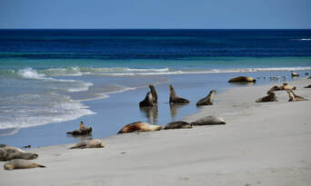 Kangaroo Island Full Day Tour from Adelaide including Lunch Thumbnail 2