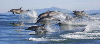 Dolphin & Wildlife Half day Cruise from Tauranga Thumbnail 1