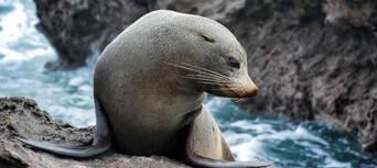 Dolphin & Wildlife Half day Cruise from Tauranga Thumbnail 3