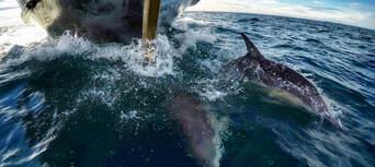 Dolphin & Wildlife Half day Cruise from Tauranga Thumbnail 5