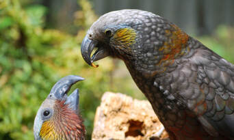 Willowbank Wildlife Reserve Admission and Tour Thumbnail 3