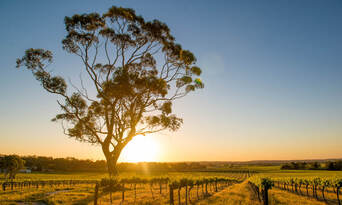Luxury Carbon Neutral Hunter Valley Wine-Tasting Departing Hunter Valley Thumbnail 4