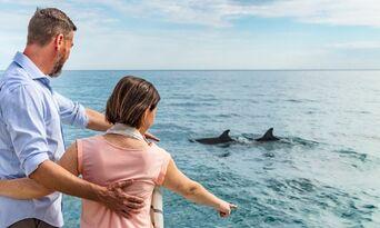 Wild Dolphin Safari Thumbnail 2
