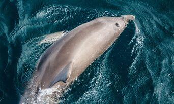 Wild Dolphin Safari Thumbnail 4