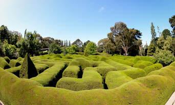 Ashcombe Maze And Lavender Gardens Thumbnail 3