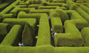 Ashcombe Maze And Lavender Gardens Thumbnail 1