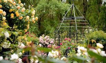 Ashcombe Maze And Lavender Gardens Thumbnail 5