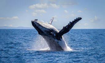 Sydney Morning Whale Watching Cruise Thumbnail 2