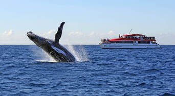Sydney Afternoon Whale Watching Cruise Thumbnail 1