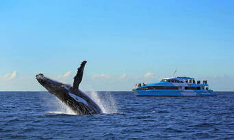Sydney Afternoon Whale Watching Cruise Thumbnail 5
