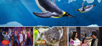 Sydney Attractions Pass - 2 Attractions Thumbnail 1