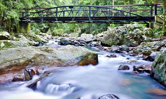 Natural Bridge Springbrook And Gold Coast Tour From Brisbane Thumbnail 1