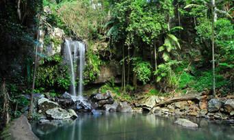 Natural Bridge Springbrook And Gold Coast Tour From Brisbane Thumbnail 2
