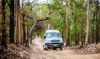 Natural Bridge Springbrook And Gold Coast Tour From Brisbane Thumbnail 6