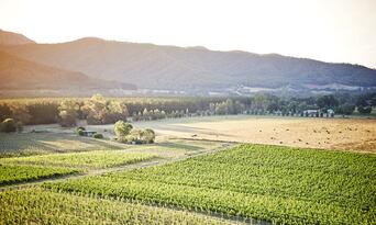 Picnic at the Feathertop Winery Thumbnail 2