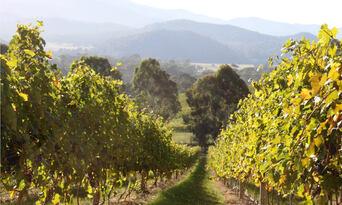 Pizzini Winery Prosciutto & Wine Tasting Tour Thumbnail 6