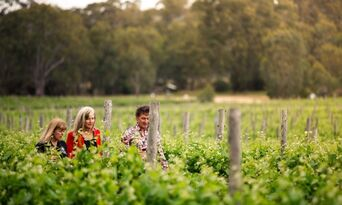 Gemtree Wines Guided Winery Tour including Picnic Lunch and Glass of Wine Thumbnail 3