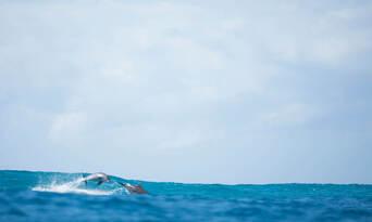 Byron Bay Dolphin Kayaking Tour Thumbnail 5