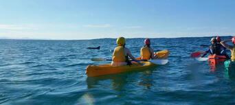 Byron Bay Dolphin Kayaking Tour Thumbnail 3
