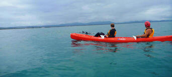 Byron Bay Dolphin Kayaking Tour Thumbnail 6