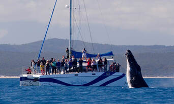 Hervey Bay Full Day Whale Watching Sailing Cruise including Lunch Thumbnail 6