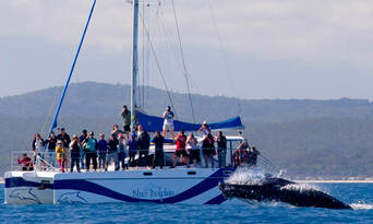 Hervey Bay Full Day Whale Watching Sailing Cruise including Lunch Thumbnail 4