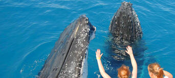 Full Day Whale Watching & Sailing Cruise with Lunch Thumbnail 4
