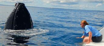Full Day Whale Watching & Sailing Cruise with Lunch Thumbnail 3