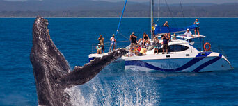 Full Day Whale Watching & Sailing Cruise with Lunch Thumbnail 1