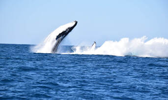 Whale Watching Jet Boat Adventure from Noosa Thumbnail 1