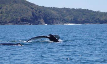 Whale Watching Jet Boat Adventure from Noosa Thumbnail 3