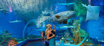 Cairns Aquarium Entry with 3 Course Dinner Thumbnail 2