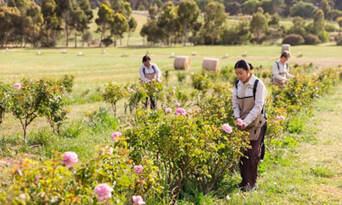 Jurlique Farm Tour - Book Now | Experience Oz