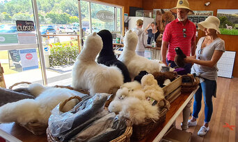 Canungra Valley Vineyards and Alpaca Farm Half Day Tour Thumbnail 2