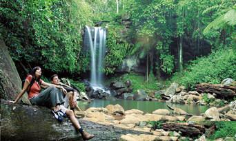 Mt Tamborine Rainforest Walk Half Day Tour Thumbnail 1