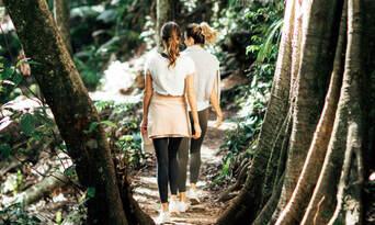 Mt Tamborine Rainforest Walk Half Day Tour Thumbnail 3