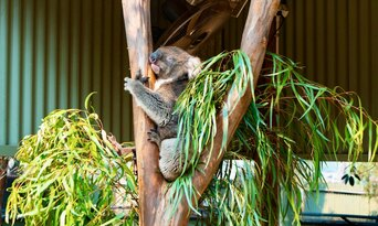 Featherdale Wildlife Park Entry Tickets Thumbnail 2