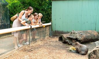 Featherdale Wildlife Park Entry Tickets Thumbnail 4
