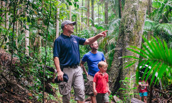 Lamington National Park and O'Reilly's Guided Day Tour Thumbnail 1
