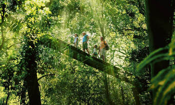 Lamington National Park and O'Reilly's Guided Day Tour Thumbnail 2