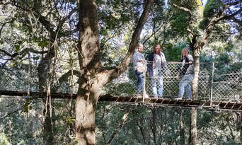 Lamington National Park and O'Reilly's Guided Day Tour Thumbnail 4
