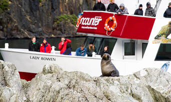 Milford Sound Cruise with Underwater Observatory Thumbnail 3